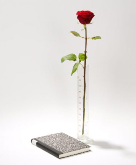 Joseph Beuys Rose für direkte Demokratie